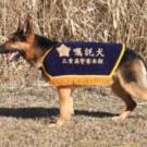 警察犬訓練の内容は?うちの犬を警察犬にするには?『BACKSTAGE』