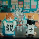ふてニャンがワイモバイル新CMに登場!動画とタレント猫春馬のプロフ